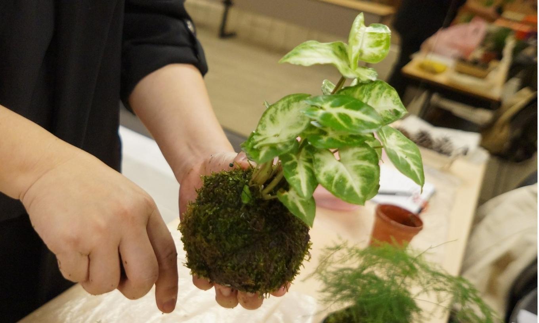 【Selected Handicrafts】Woodworking   Healing Moss Ball