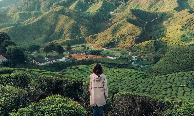 茶鄉體驗小旅行